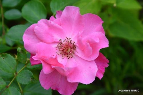 jardin,papillons,anniversaire d'Ines,bricolage 082.JPG