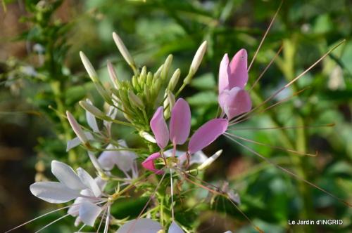dahlias,jardin,puces st Avit Seigneur,Paniers Issigeac,Romane 052.JPG