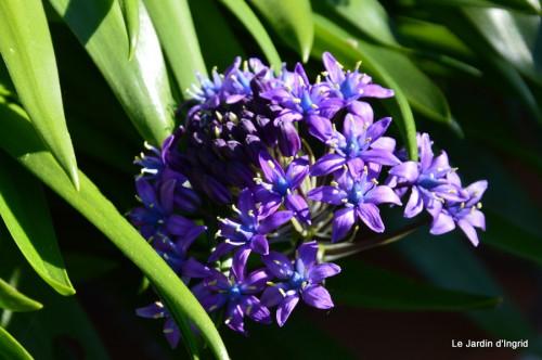 géraniums,glycine Monpazier,cabane,arums,fleurs sauvages 034.JPG