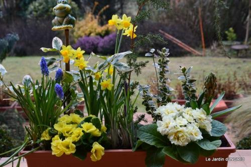 rose blanche,jardinière ,jardin,pt cyclamen 003.JPG