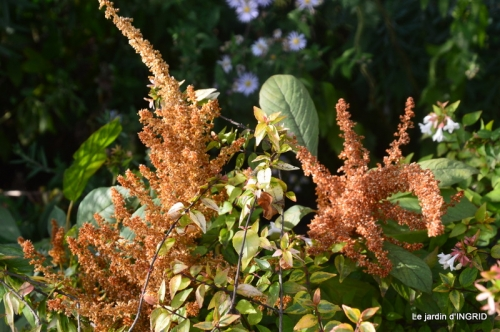 lantanas,jardin aout, 056.jpg