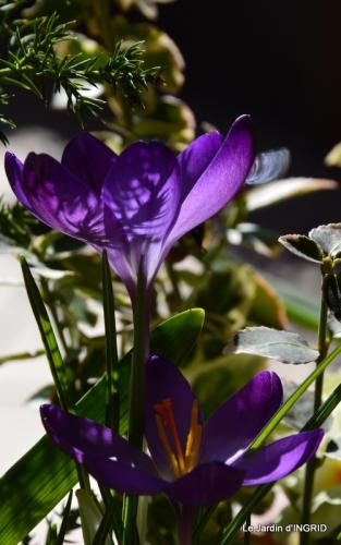 jardinière,insectes,achats 009.JPG