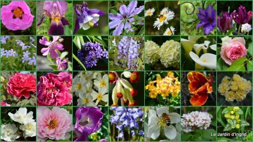 2014-04-06 tillandsia,rainette,terreau,jardin1.jpg