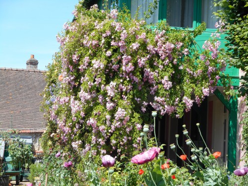 Normandie,jardin Monet,baie de Somme,chez Marylaur 181.JPG