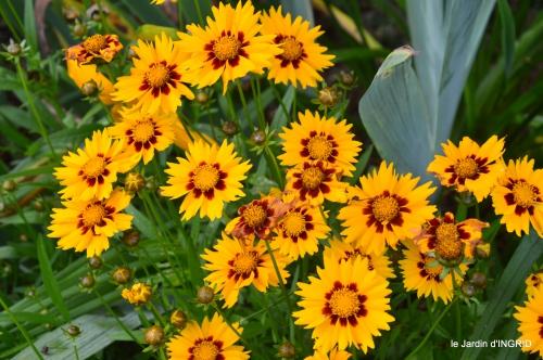 jardin,chez Bernadette,puces,cygnes,pluie 109.JPG