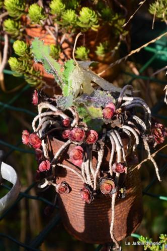troncs,automne,vieilles photos 028.JPG
