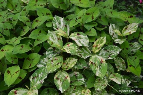 jardin,chez Bernadette,puces,cygnes,pluie 123.JPG