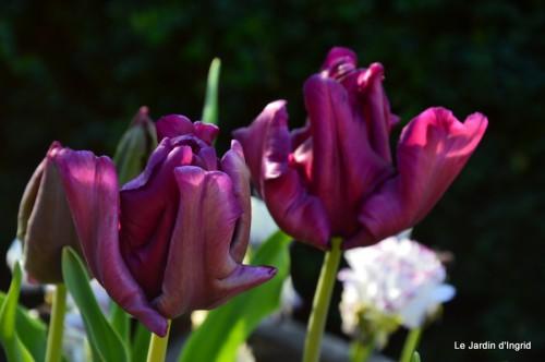 géraniums,glycine Monpazier,cabane,arums,fleurs sauvages 002.JPG
