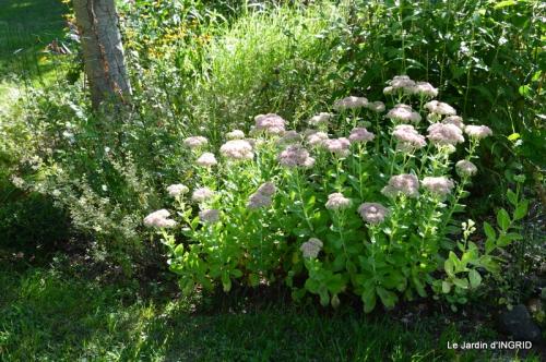 jardin ,bouquet 015.JPG