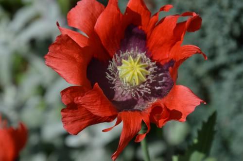 les épouvantails ,fleurs 004.JPG