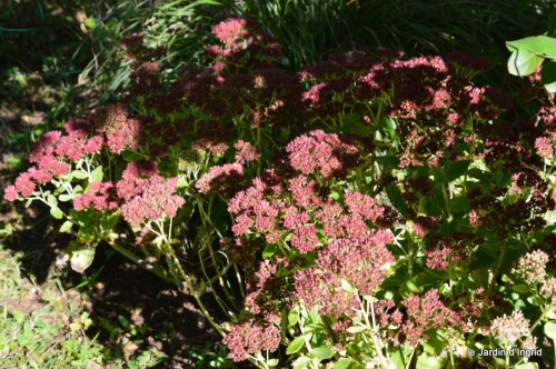 jardin octobre,chez Marylaur,Arnaud ,Ariane,la mer,sauges 179.JPG