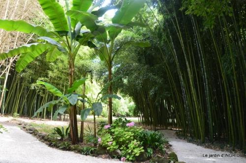 bambous Roque Gageac,jardin,bouquet 161.JPG