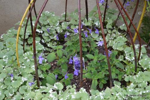 jardin,potager,roses,sauges 120.JPG
