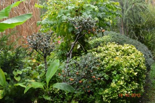 champignons,citrouilles,st Mayme de Péreyrol,fuschias,jardin aut 116.JPG