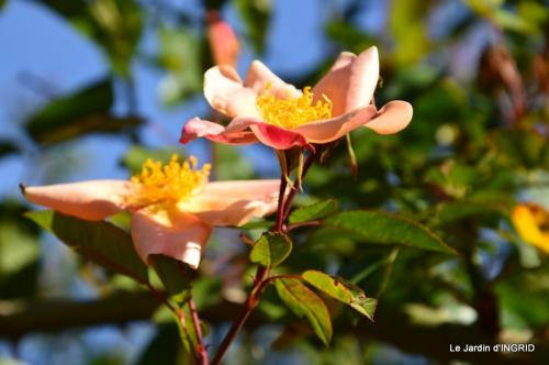 jardin, feuilles,sauges,gloriette,land art 096.JPG