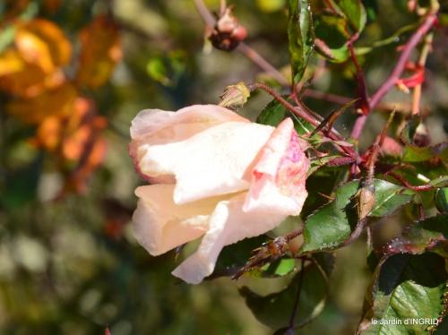jardin givré,taille de prunus 002.JPG