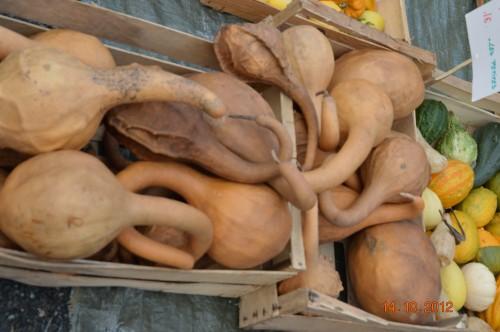 champignons,citrouilles,st Mayme de Péreyrol,fuschias,jardin aut 073.JPG
