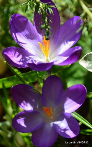 jardinière,insectes,achats 001.JPG
