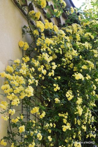 colline,orchidée,nature,jardin fleuri 020.JPG
