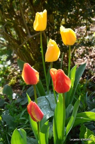 jardin confiné ,osier,magnolia jaune 020.JPG