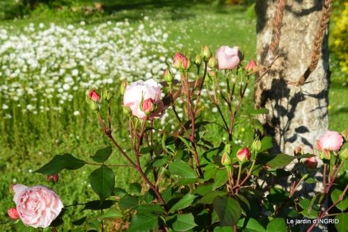 roses,jardin,Le Fleix,bleu 102.JPG