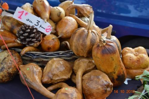 champignons,citrouilles,st Mayme de Péreyrol,fuschias,jardin aut 068.JPG