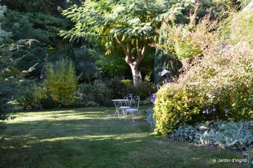 jardin,asters,fleurs blanches,chatte,rosiers roses 035.JPG