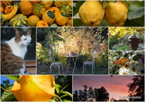 2018-10-01 famille,jardin,bouquet,papillons2.jpg