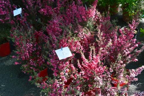 muguet,féte des fleurs Lalinde,jardin 097.JPG