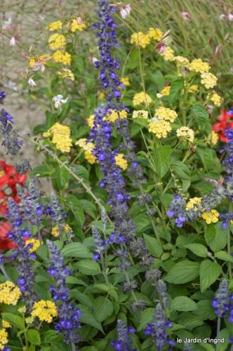 après la pluie,Tuillères,Mne Peirichou fleurs 083.JPG