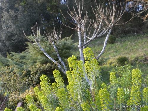 Romane,arbre de Paques,chez Bernadette,jardin 040.JPG