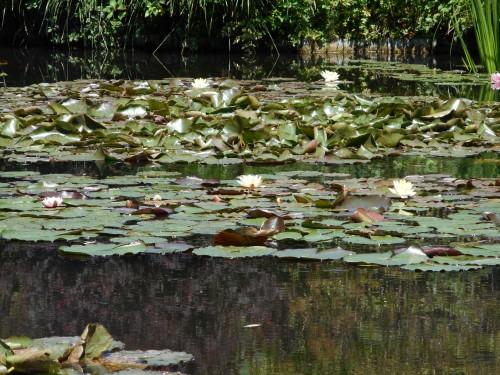 Normandie,jardin Monet,baie de Somme,chez Marylaur 205.JPG