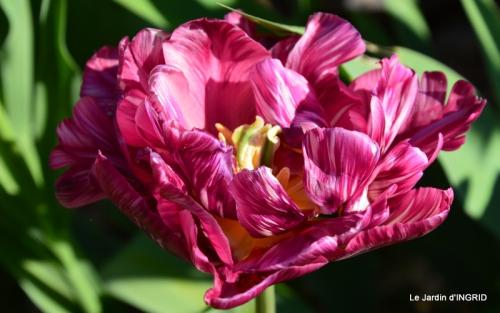 Bergerac, jardin ,arbres fruitiers,printemps 046.JPG