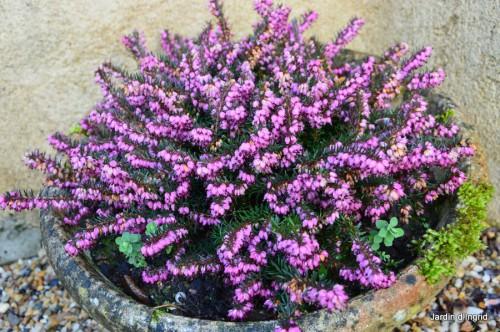 matin d'hiver,tableaux de fleurs janvier 029.JPG