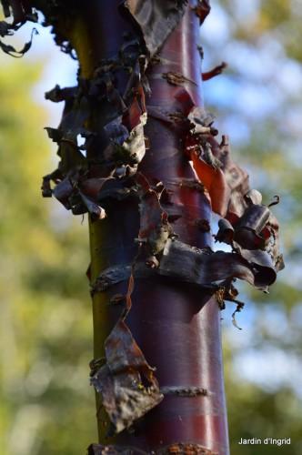 troncs,automne,vieilles photos 045.JPG