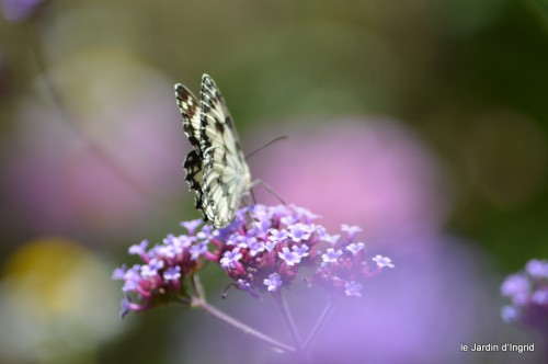 coeur des fleurs,papillons,libellules 116.JPG