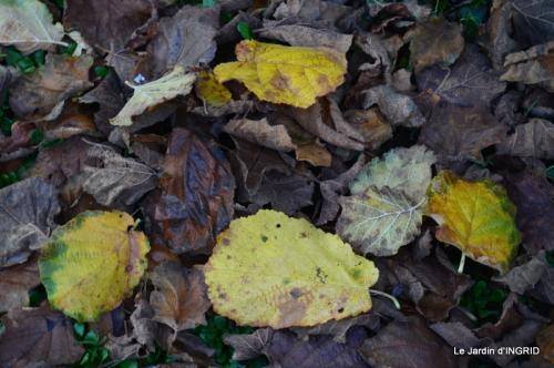 Romefort,bord de Creuse,vent,feuilles,jardin,canal 186.JPG