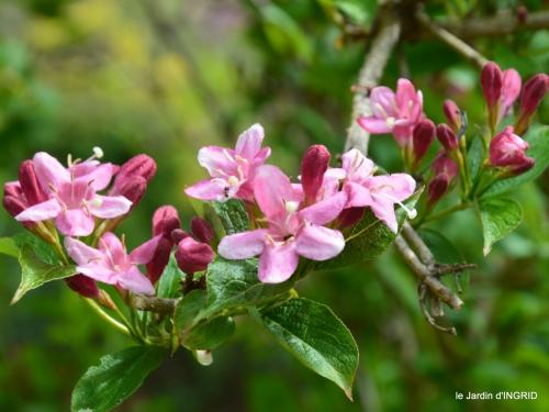 jardin printemps 139.JPG