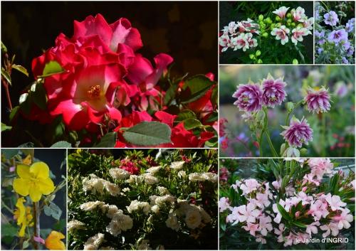 2016-05-01 coquelicots,fête des fleurs Lalinde,fouleix,jardinage.jpg