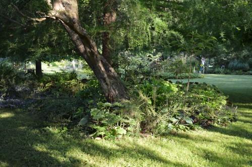 potager ,roses,jardin 020.JPG