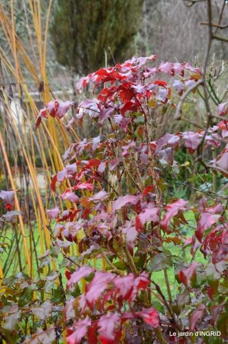 jour de l'an,hiver au jardin,héllébores 113.JPG