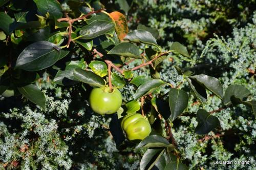 jardin,puces Lasmonzie,asters 004.JPG