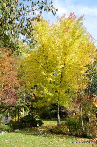 les arbres en automne,cabane 073.JPG