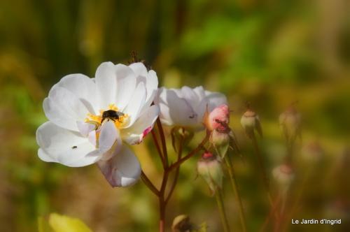 jardin automne ,travaux feuilles 033.JPG