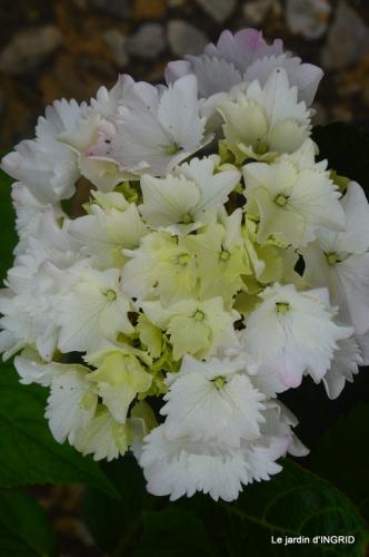 Colombier,Cadouin,jardin,roses,pluie 047.JPG