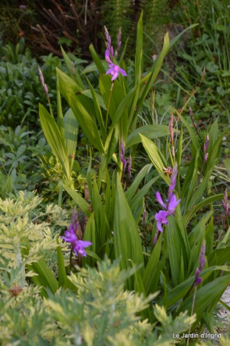 Ciron,pivoine,escargot,jardin,ancolie,glycine 014.JPG