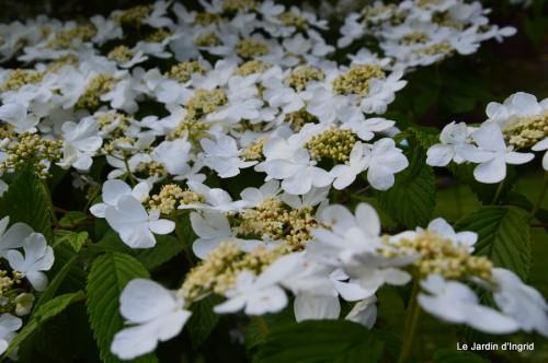mésanges,escargots,ros. de banks,abeilles,Monpazier,Banes,Forêt 085.JPG