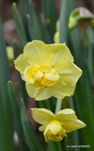 printemps,osier,tipi 029.JPG