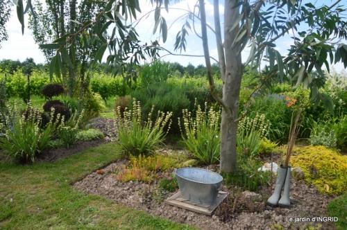 inondation,jardin,oeufs cygnes,chez Nathalie 073.JPG