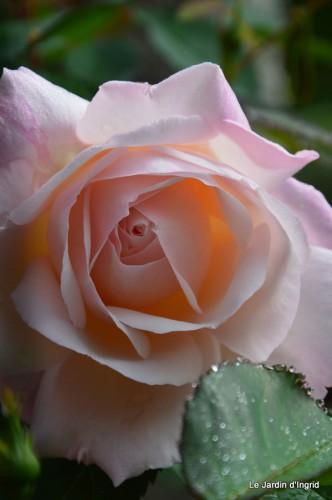 jardin,roses,cabane 008.JPG